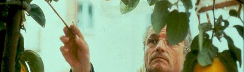 Ciclo 'Pinceladas de cine': 'El sol del membrillo'