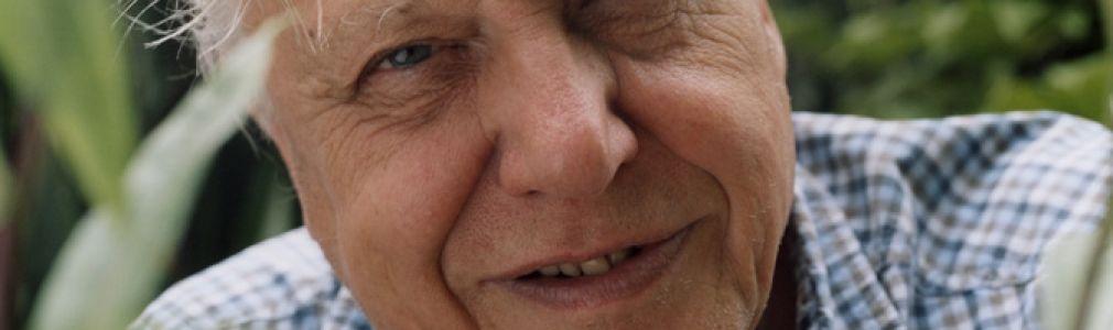 David Attenborough: 'Los pájaros del paraíso'