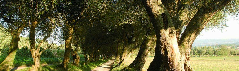 Jardín del Pazo de Santa Cruz de Ribadulla 2