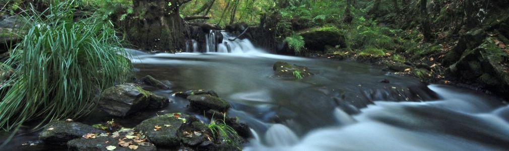 Senda fluvial botánica del río Mera