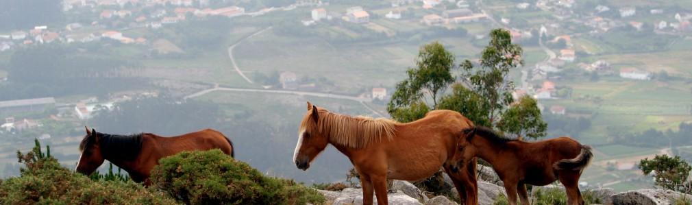 Rías Baixas - Barbanza: Paisajes Míticos