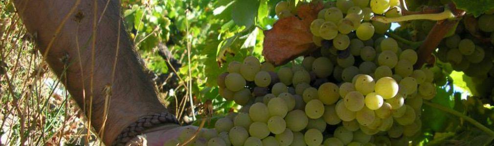 Cata de uvas y vinos con Alfonso Losada