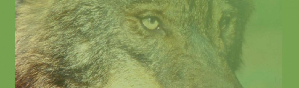 Lobo: Vida salvaxe e mundo rural