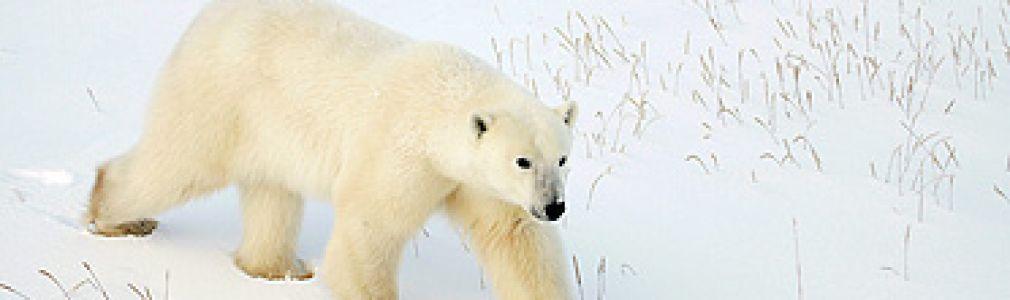'El Ártico se rompe'