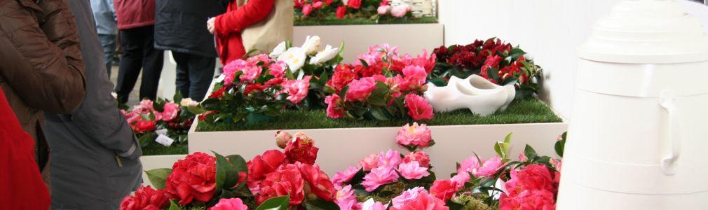 II exposición 'Camelia, flor de Galicia'