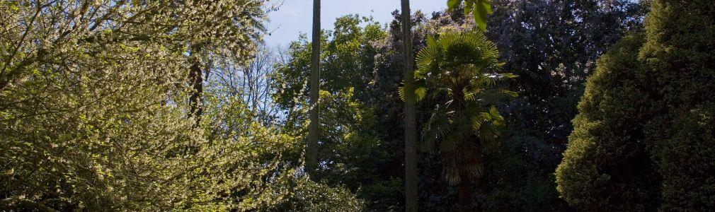 Jardín del Pazo de Santa Cruz de Ribadulla 4