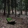 Exposición colectiva 'Inverno no parque do Carballiño'