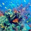 'Biodiversidad y colecciones de historia natural'