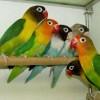 Exposición de pájaros