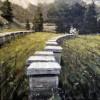 Exposición de pintura apícola