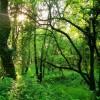 Ciclo 'Los lunes del Ateneo': 'La potencialidad del sector forestal gallego'