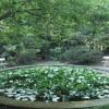 Jardín del Pazo de Santa Cruz de Ribadulla 3