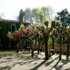 Jardín del Pazo de Faramello 2
