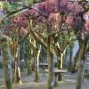 Jardín del Pazo de Faramello 7