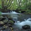 Mera Botanical Riverside Path