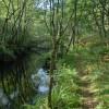Senda fluvial botánica del río Mera 2