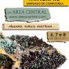 I Feria de Minerales en Área Central