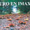 X Concurso de fotografía 'Touro en Imaxes'