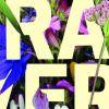 'Verán en Verde': Roteiro polo parque de Belvís