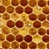 'Mes de la apicultura': 'Los productos de la colmena dentro de una alimentación saludable'