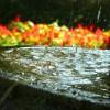 Jardín Botánico-Artístico de Padrón 2