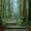 Tanabe invita a Santiago al décimo aniversario de la declaración del Camino de Kumano como Patrimonio de la Humanidad