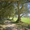 Jardín del Pazo de Santa Cruz de Ribadulla 6