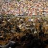 O Mercado de Abastos de Santiago acolle a presentación da Rapa das Bestas de Sabucedo