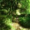 Ruta circular del río Liñares